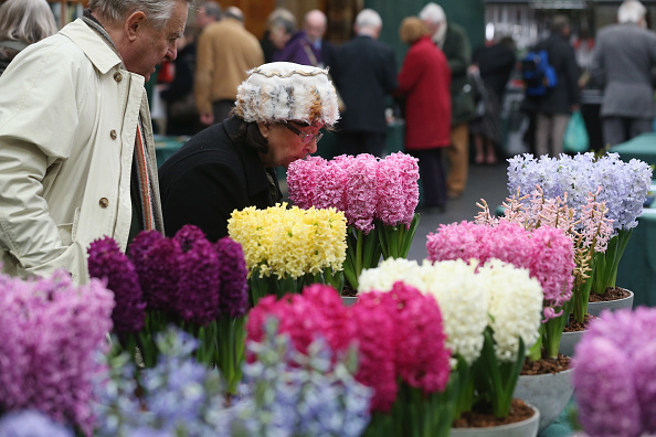 Smelling「Exhibitors Display At The RHS Great London Plant Fair」:写真・画像(4)[壁紙.com]