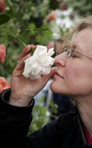 Smelling「Chelsea Flower Show」:写真・画像(9)[壁紙.com]