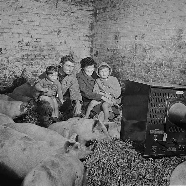 レクレーション活動「Watching telly with the pigs」:写真・画像(4)[壁紙.com]
