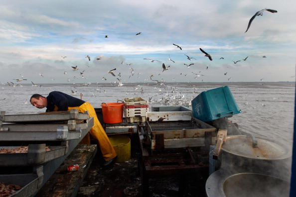Potted Plant「Southport Shrimpers Out At The Beginning Of The Season」:写真・画像(15)[壁紙.com]
