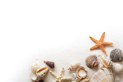 殻「ビーチの砂、ヒトデ、シーシェルズフレームの国境に白背景」:スマホ壁紙(2)
