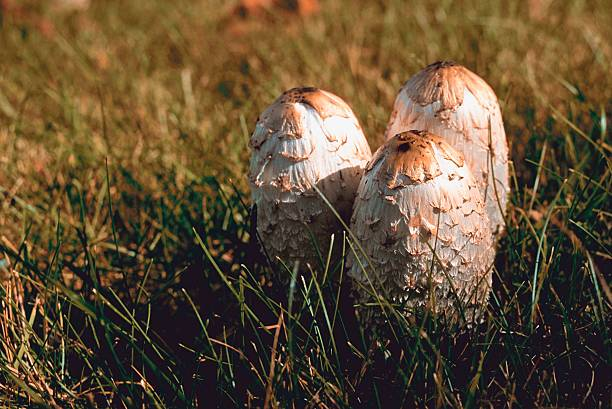 Mushrooms in grass:スマホ壁紙(壁紙.com)
