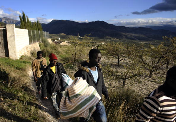 Grove「Fewer Jobs For Immigrant Workers In Spanish Olive Harvest」:写真・画像(0)[壁紙.com]