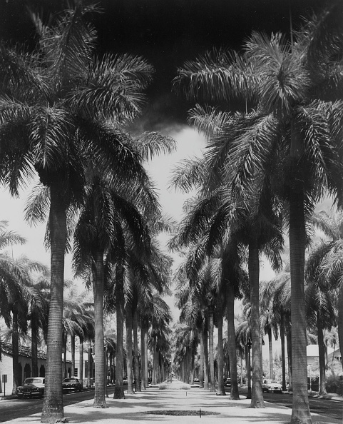Tropical Climate「Palm Street」:写真・画像(6)[壁紙.com]