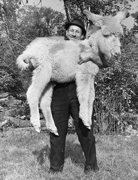 動物「Raising A Donkey」:写真・画像(15)[壁紙.com]