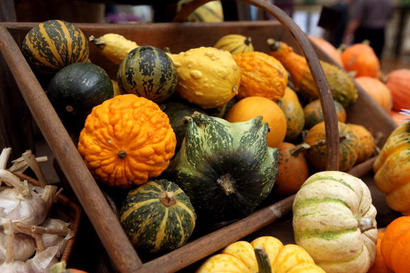 Gourd「The RHS Taste Of Autumn Show Opens To The Public」:写真・画像(10)[壁紙.com]