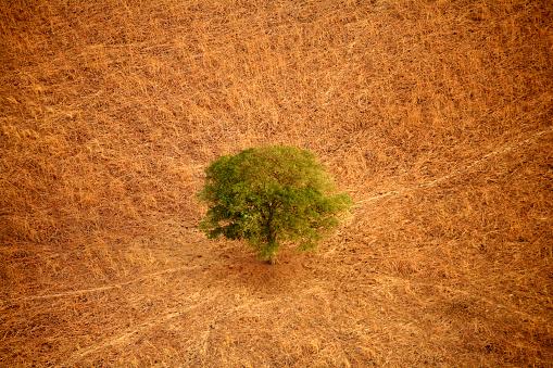 Single Tree「Chad, Zakouma National Park, Acacia desolate in the savannah」:スマホ壁紙(3)