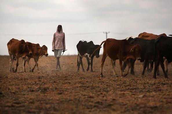 Grass Family「Maasai People Struggle As Kenya Declares Drought Emergency」:写真・画像(6)[壁紙.com]