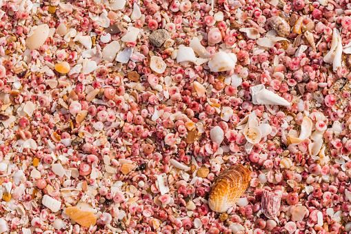 snails「Sultanate Of Oman, Ras al Hadd , Ras al Hadd beach, pink seashells」:スマホ壁紙(10)