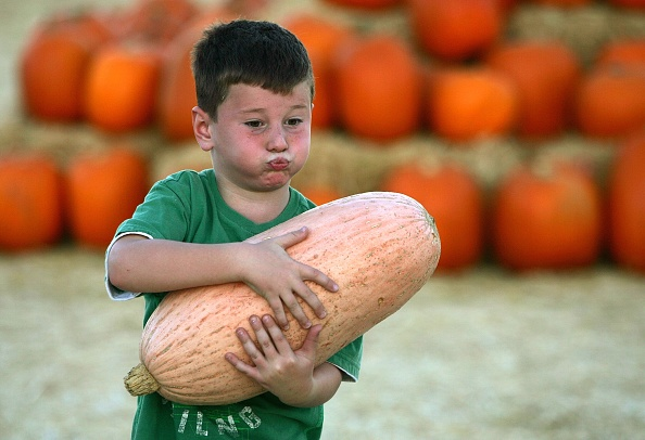 Gourd「Pumpkin Patch Attracts Fall Revelers」:写真・画像(0)[壁紙.com]