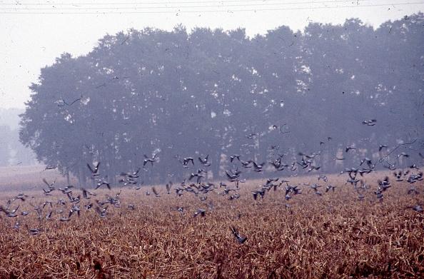 Nouvelle-Aquitaine「Pigeon Hunt」:写真・画像(4)[壁紙.com]