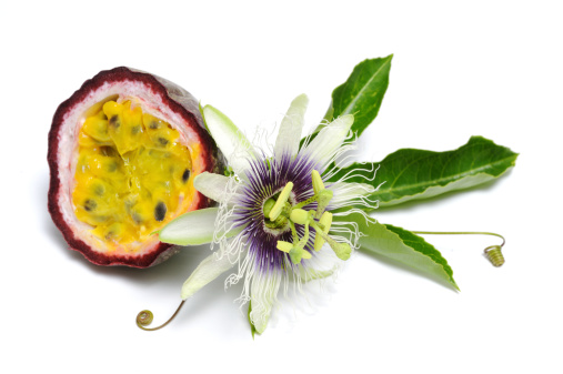Passion Fruit「Passionfruit with flower」:スマホ壁紙(5)
