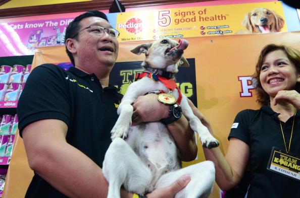Vertebrate「Hero Dog Kabang Returns Home After Surgery」:写真・画像(2)[壁紙.com]