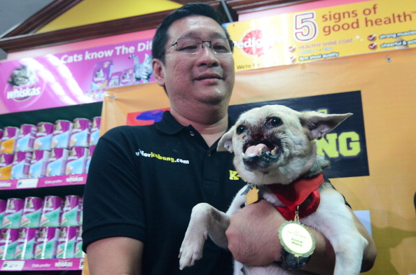Vertebrate「Hero Dog Kabang Returns Home After Surgery」:写真・画像(3)[壁紙.com]