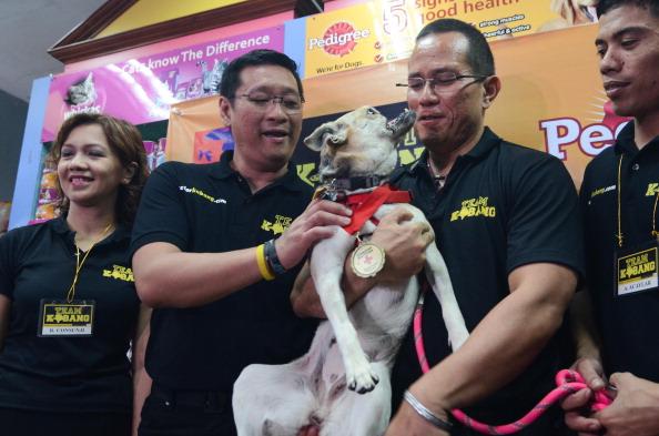 Vertebrate「Hero Dog Kabang Returns Home After Surgery」:写真・画像(1)[壁紙.com]