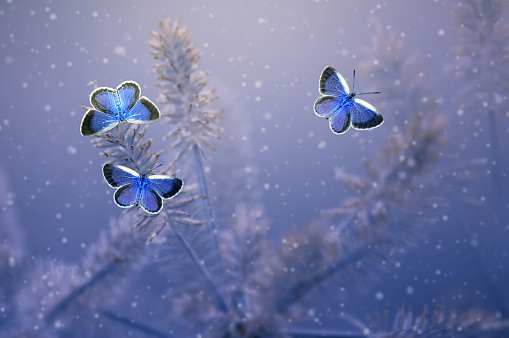 Animal Wing「Three butterflies on a plant, Indonesia」:スマホ壁紙(4)