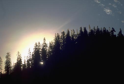 The Nature Conservancy「Sunset Behind Fir Ridge」:スマホ壁紙(19)