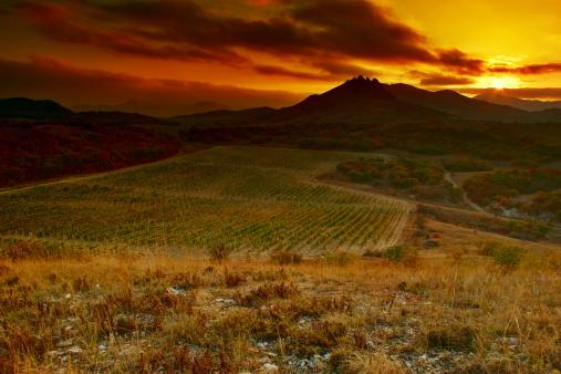 Ukraine「Sunset behind vineyard」:スマホ壁紙(18)