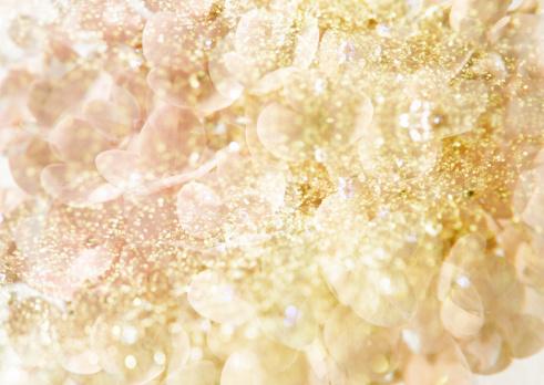 あじさい「Light Colored Flower」:スマホ壁紙(0)