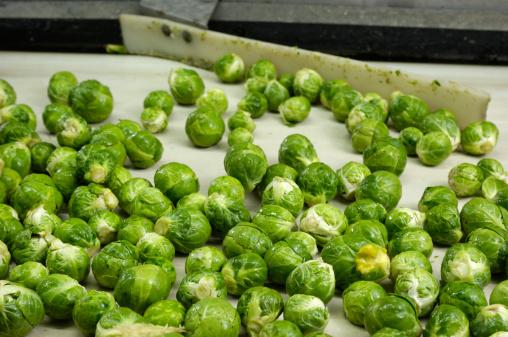 Belt「Harvested Brussels Sprouts on conveyor Belt」:スマホ壁紙(15)