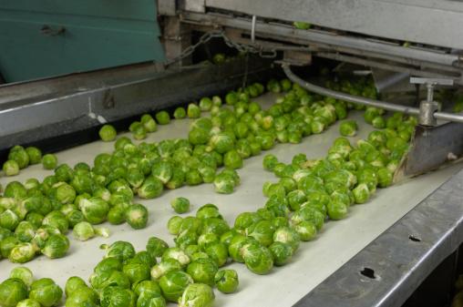 Belt「Harvested Brussels Sprouts on conveyor Belt」:スマホ壁紙(7)
