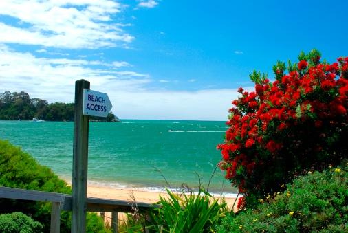 New Zealand Culture「Beach Access on Kaiteriteri, Summer」:スマホ壁紙(2)