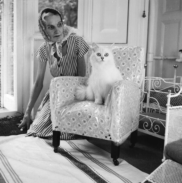 動物「Cat Lover」:写真・画像(7)[壁紙.com]