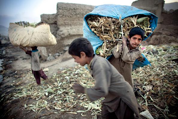 Kabul「Afghans Sort Through Garbage At A Dump」:写真・画像(16)[壁紙.com]