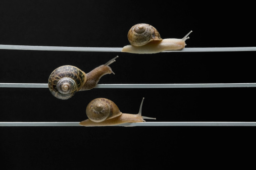 カタツムリ「Snail race」:スマホ壁紙(11)
