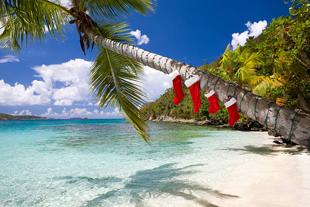 Christmas decorations on a palm tree at the Caribbean beach:スマホ壁紙(壁紙.com)