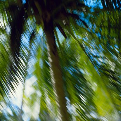 Gale「Palms in the wind」:スマホ壁紙(18)