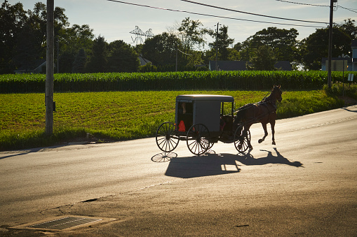 Horse-drawn carriage「Amish buggy on a late summer afternoon」:スマホ壁紙(12)