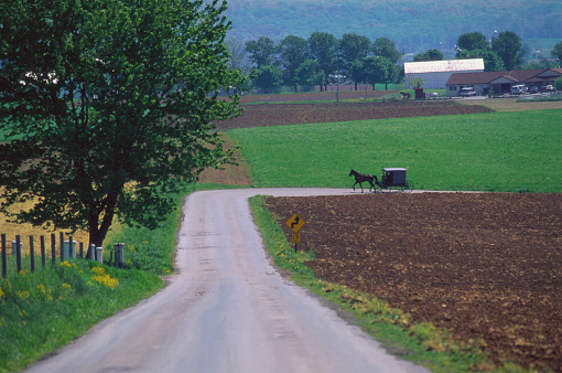 Pennsylvania「Amish Buggy Traveling Farm Road」:スマホ壁紙(10)