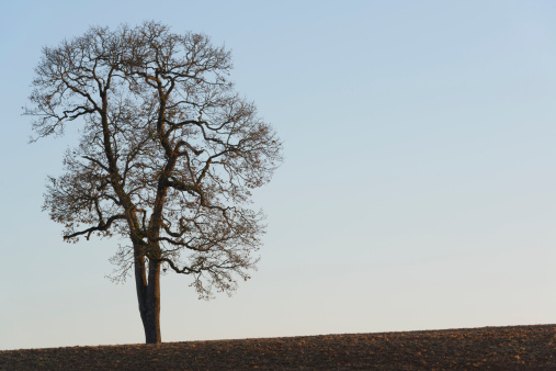秋「USA, Oregon, Marion County, Tree 」:スマホ壁紙(17)