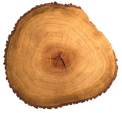 Tree Ring「Polished slice through an oak tree」:スマホ壁紙(17)