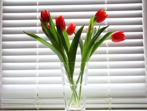 Fungus Gill「tulips in glass vase against  shutter background」:スマホ壁紙(10)