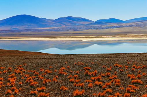 綺麗「ラグナ Tuyacto - 湖 Tuyacto と Miniques 雪を頂いた山 - 青緑色の湖塩ミラー反射と牧歌的なアタカマ砂漠、火山の風景パノラマ-サン ペドロ デ アタカマ、チリ、Bolívia、アルゼンチン国境」:スマホ壁紙(10)