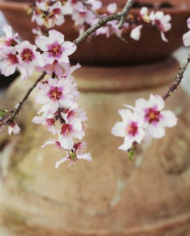 梅の花「Plum branches」:スマホ壁紙(13)