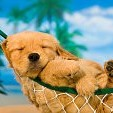 動物の子供壁紙の画像(壁紙.com)
