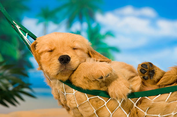 Young puppy in hammock with tropical background:スマホ壁紙(壁紙.com)