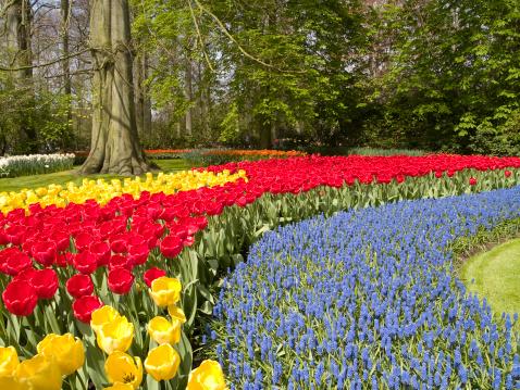 Keukenhof Gardens「Spring Flower Beds」:スマホ壁紙(16)