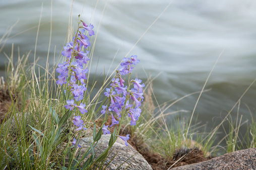 アーカンソー川「Spring flowers」:スマホ壁紙(11)