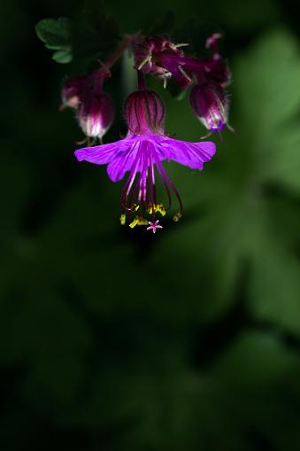 Midday「Spring Flower」:スマホ壁紙(8)