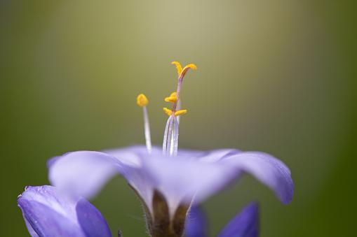 Midday「Spring Flower」:スマホ壁紙(14)