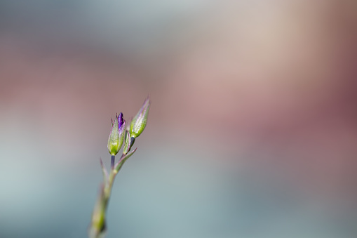 Midday「Spring Flower」:スマホ壁紙(15)