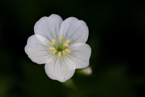 Midday「Spring Flower」:スマホ壁紙(7)