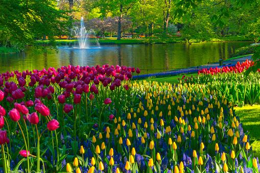 Netherlands「Spring Flowers in a Park」:スマホ壁紙(18)
