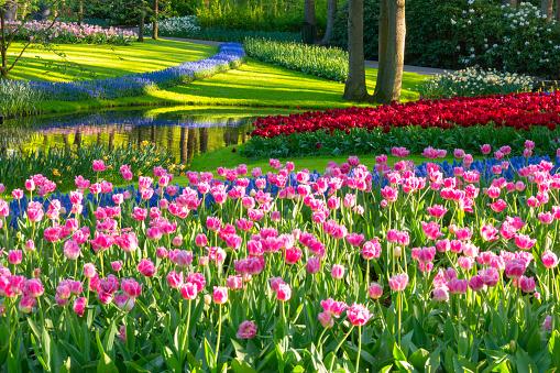 水仙「春の花の公園」:スマホ壁紙(7)