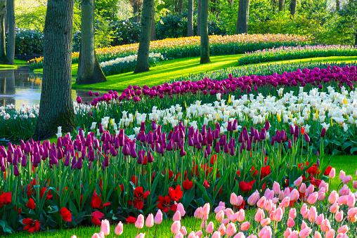Keukenhof Gardens「Spring Flowers in a park.」:スマホ壁紙(9)