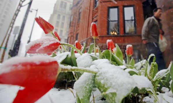 Springtime「April Snow Foils Springtime In Midwest」:写真・画像(9)[壁紙.com]